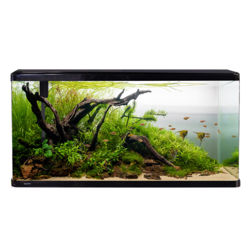 Aqua One Lifestyle 190L Complete Glass Aquarium